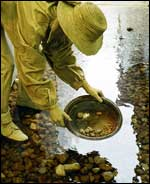 Panning for gold in stream