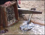 Using hand sluice for alluvial gold